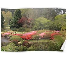 Rhododendron Gardens in the Dandenongs Poster