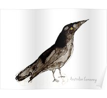 Birds in INK ~ Australian Currawong Poster