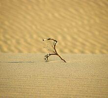 Dead desert by João Figueiredo
