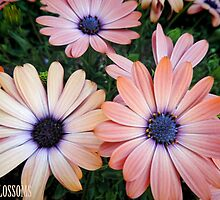 Spring Blossoms by Marilyn Harris Photography by Marilyn Harris