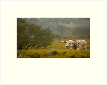 Countryside Longhorns by kristijohnson
