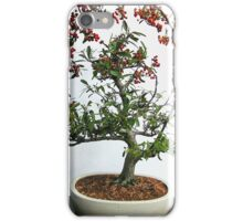 Pyracantha bonsai iPhone Cover iPhone Case/Skin
