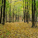Autumn by terjekj