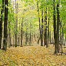 Autumn in Norway II by terjekj
