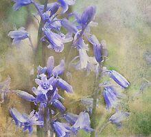Bluebells by Carol Bleasdale
