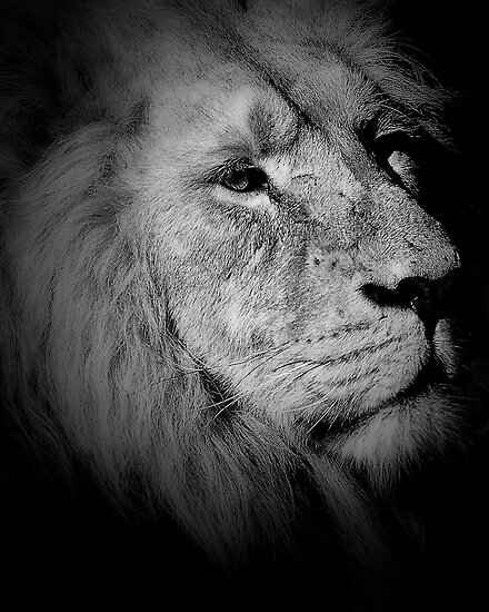 Lion by Matt Sillence