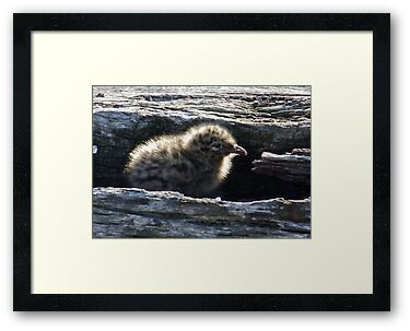 Seagull Baby by Rick Playle