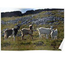 Wild goat family II Poster