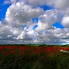 Poppy field 3-passing light by rennaisance