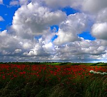 Poppy field 3-passing light by Mark Haynes Photography