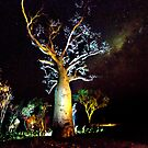 The Astronomer Tree by David Haworth