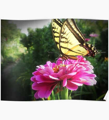 Flower and Butterfly Poster