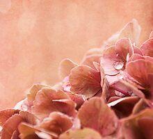 autumnbreeze by lucyliu