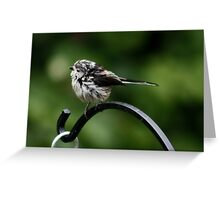 Long Tailed Tit Baby Greeting Card
