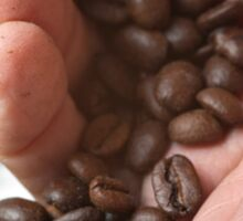 hand pouring out roasted Coffee Beans Sticker