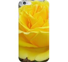 Beautiful Yellow Rose with Natural Garden Background iPhone Case/Skin