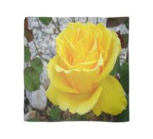 Beautiful Yellow Rose with Natural Garden Background Scarf