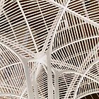 Ribs Bone by artkitecture