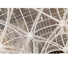 Ribs Bone Photographic Print