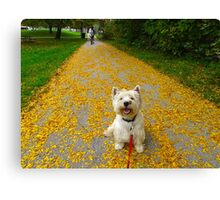 Rolling in it! Rich in leaves Canvas Print