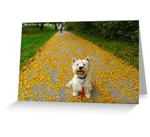 Rolling in it! Rich in leaves Greeting Card
