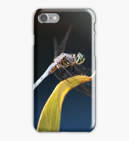 Blue Dasher Dragonfly Iphone Case iPhone Case/Skin