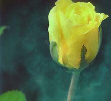 Singular Beauty by ACampbell
