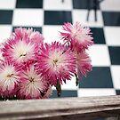 Flores Brighton by Constanza Caiceo