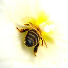 Pollinated Bee in White Flower by ©The Creative  Minds