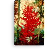 Scarlet Maple Canvas Print