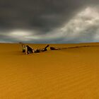 PERON SAND DUNES by THOMAS LUCHT