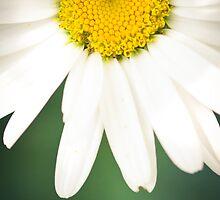 daisy by Margherita Calati