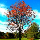 Chestnut Tree in Autumn by ©The Creative  Minds
