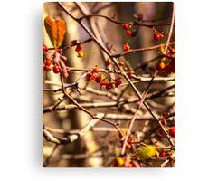 Winter Berries 2 Canvas Print