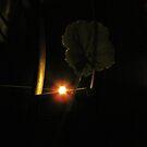 Night-Shade A-Light by ArtOfE