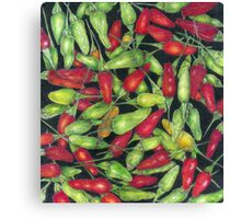 Chilly Harvest (coloured pencils) Canvas Print