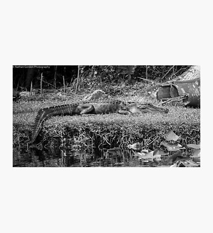 Living Dinosaur Photographic Print