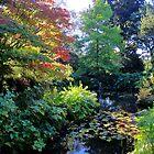 Autumn Tranquility by John Dalkin