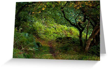 autumn sunshine by paul mcgreevy