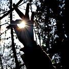 All Seeing Light Bringer by AkaneZuki