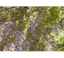 JWFrench Collection Garden 1 Photographic Print