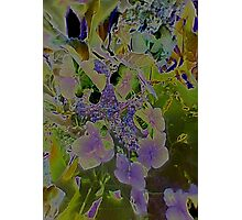 JWFrench Collection Flower 2 Photographic Print