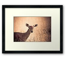 Autumn Doe Framed Print