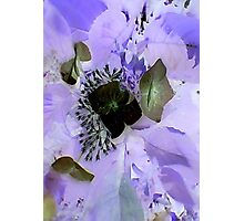 JWFrench Collection Flower 4 Photographic Print