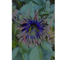JWFrench Collection Flower 6 Photographic Print