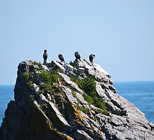 Birds on a large rock  by bobbykim666