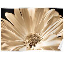 Monotone floral Poster