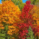 Gatineau Park Colourburst by Daniel  Parent