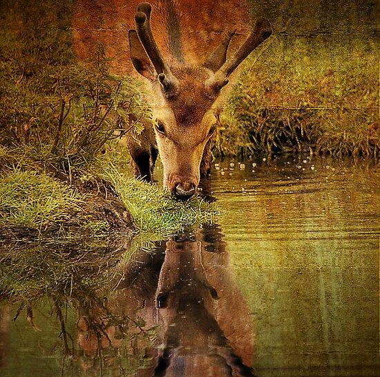 Deer Oh deer, do I look that old? by Alan Mattison