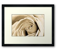 Creamy Rose Framed Print
